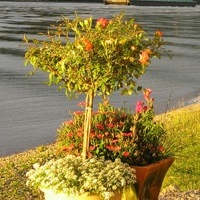 2 containers filled with plants, 1 has a small tree, and the other container has flowers.
