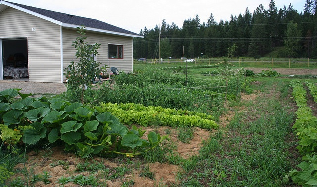 A photo showing some of the produce growing at Corner Veggies in Jaffray, B.C.
