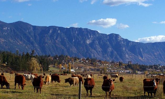 The Skimmerhorn Mountain range towering over a farm near Creston, B.C.