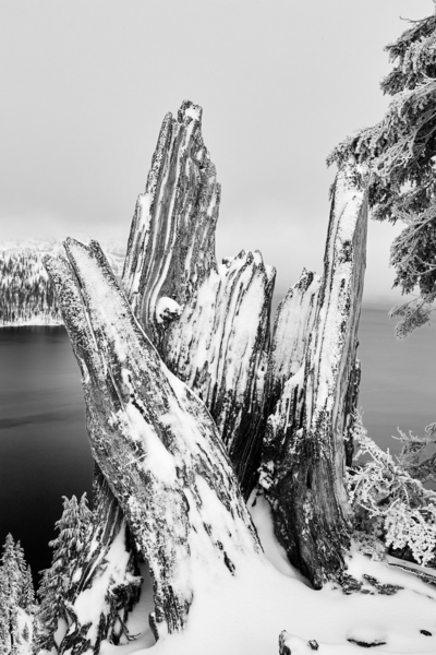 trees and driftwood covered in snow with the lake in the background