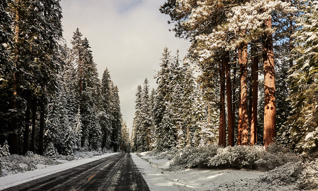winter road with snowy trees on either side