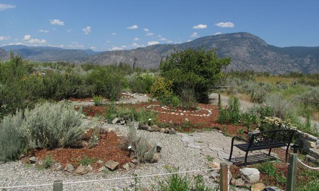 The native plants garden at the Osoyoos Desert Centre.