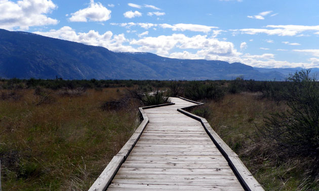 Visitors to the Osoyoos Desert Centre can explore the conservation area via elevated wooden boardwalks.