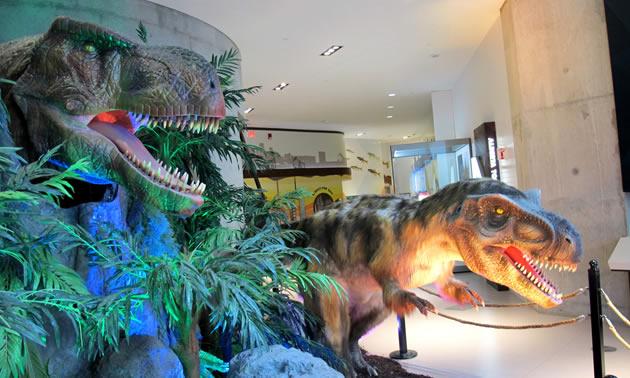 Close-up of dinosaur skeleton