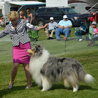 A lady in a pink skirt holding a collie dog.