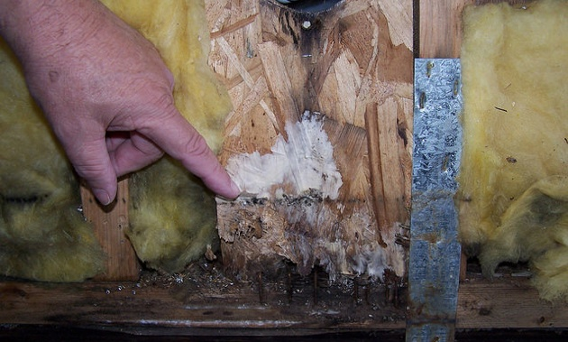 A finger pointing out dry rot caused by leak around furnace vent.