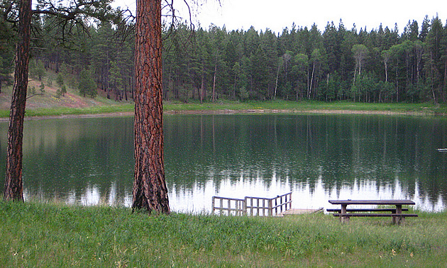 trees and lake by a hiking trail