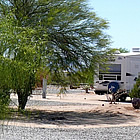Palo verde tree in an RV park, Florence Arizona