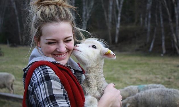April is lambing season at Aveley Alpine Ranch.