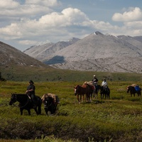 Pack horses traveling through Stone Mountain Provincial Park.