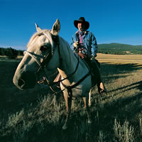 A cowboy on a horse in a pasture.