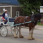 Clydesdale horse pulling a carriage