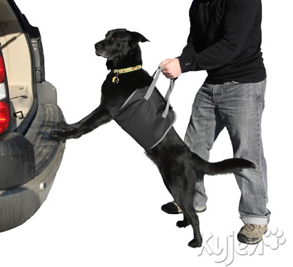 dog being lifted into a vehicle with a lift harness product from Kyjen