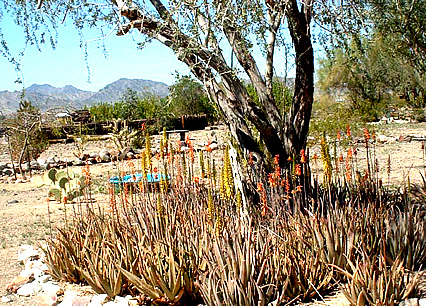 Celia's Rainbow Gardens