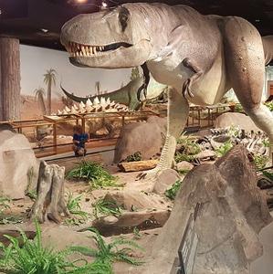A display at the Las Vegas Natural History Museum.