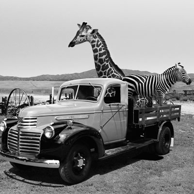 1942 GMC 1-Ton stake-side truck, with a giraffe and zebra in the back.