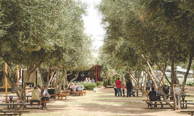 The outdoor dining area at the Queen Creek Olive Mill has picnic tables under trees.