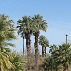 palm trees beside a desert lagoon