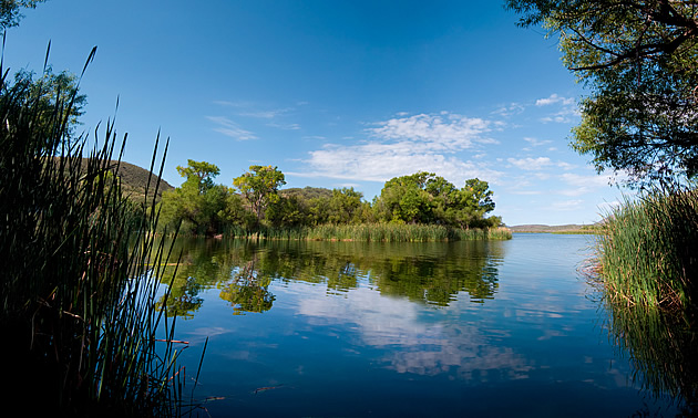 lake with trees around it in Arizona, USA