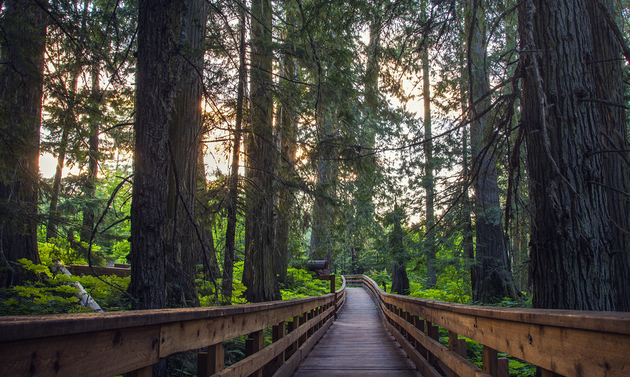 forest with a boardwalk through it