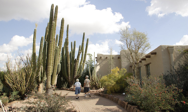 cacti at a desert botanical garden