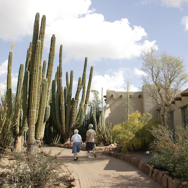 cacti at a desert botanical garden
