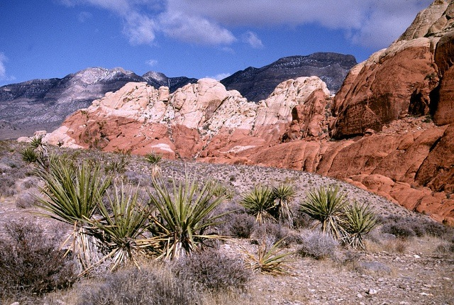 Aptly named, Red Rock Canyon is located in the Mojave Desert and just a short drive from the Las Vegas strip.
