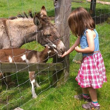 Girl feeding some animals at Kilby Historic site
