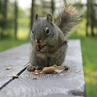 The Peanut Inspector is on duty.