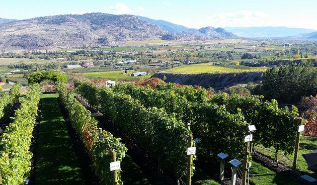 Osoyoos BC winery