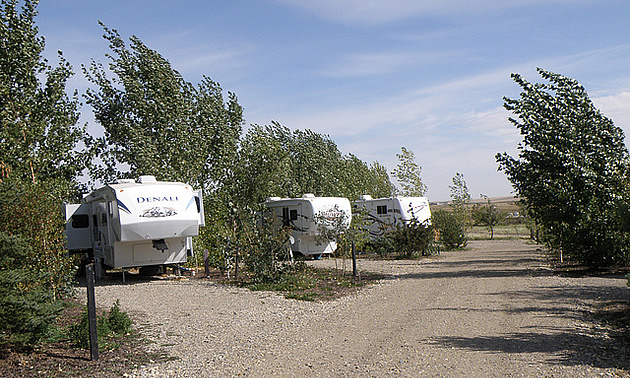 RVs parked side by side in a resort
