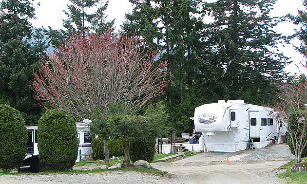 RV in a lot with blossoming trees around it