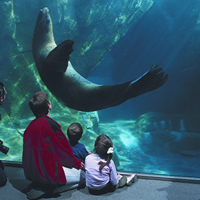 Children looking at a sea lion at the SeaLife Centre in Seward, Alaska.