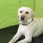 dog in a tent for RV camping