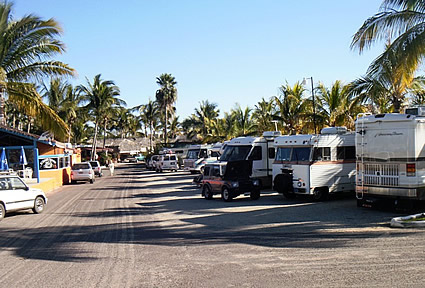 RVs parked next to palm trees