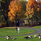 people and geese in a park with skyscrapers in the background