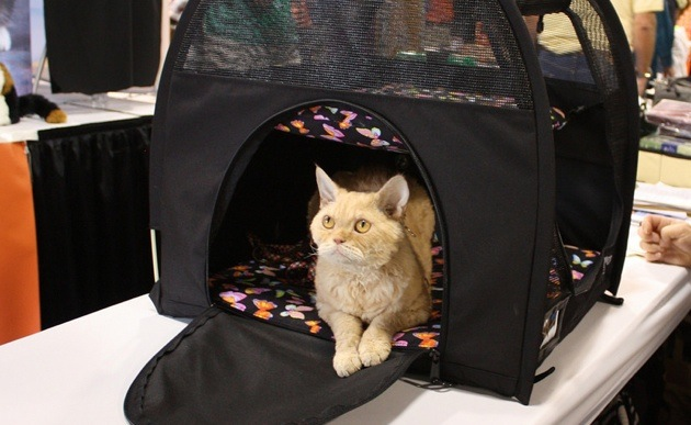 An orange cat sitting in its SturdiBag.