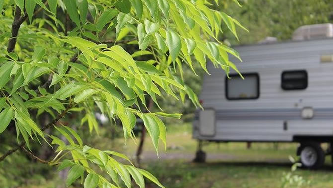 Camper tucked among leafy trees.
