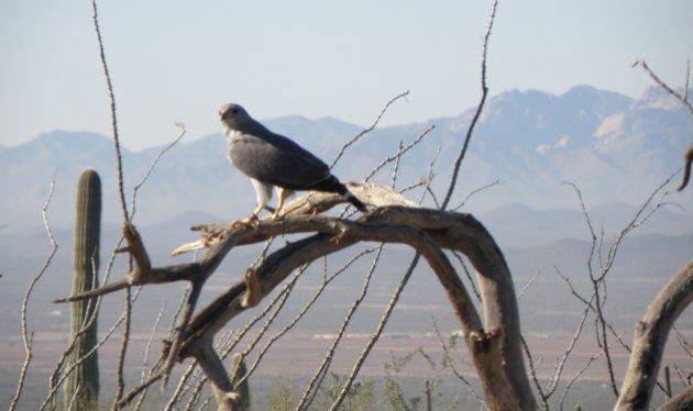 Hiking trails in Tucson Arizona