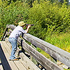 person on a dock watching birds at a marsh sanctuary