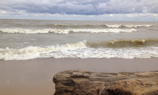 Winnipeg Beach with the waves rolling in and driftwood on the beach.