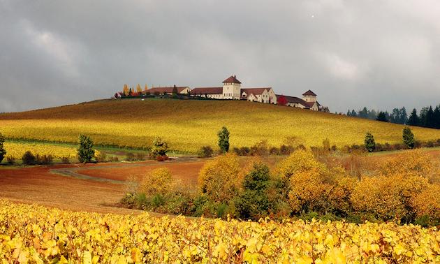 Autumn scene, vineyard, winery buildings